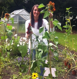 Sunflowers grown at Caldies Eco School in Liverpool