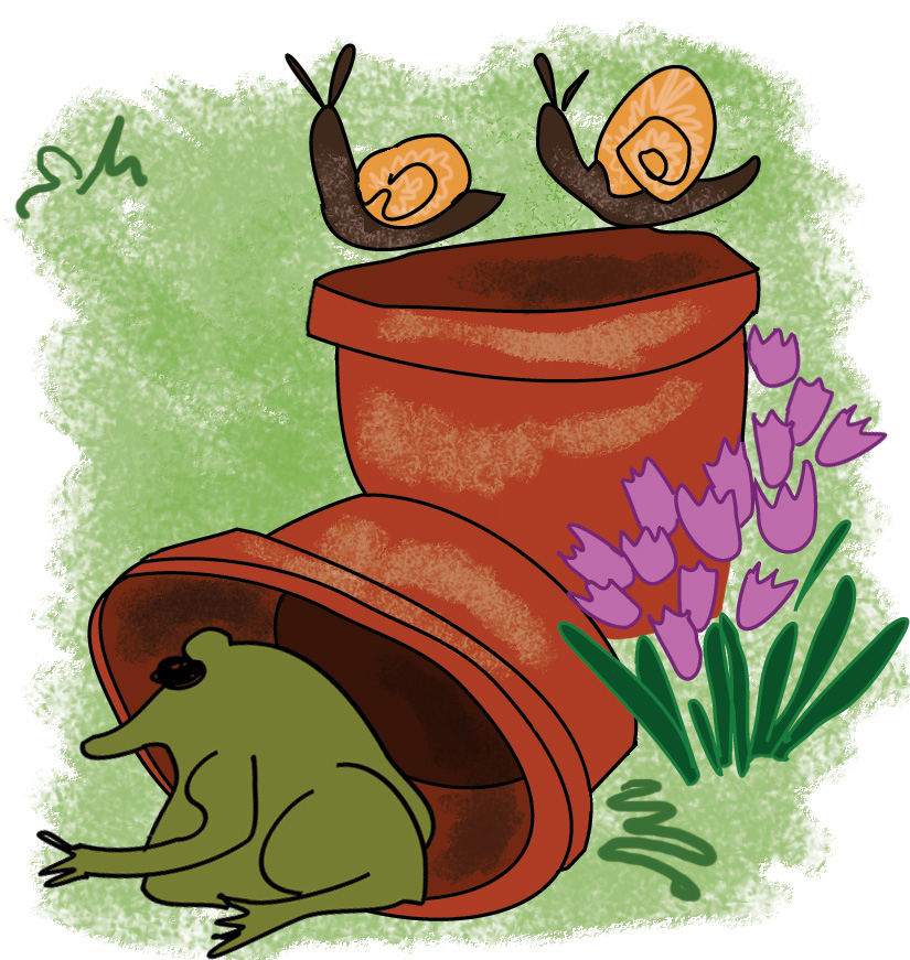Frogs, plant pots and snails