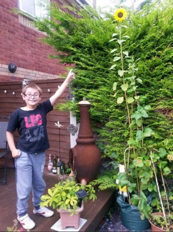 Luke and sunflower