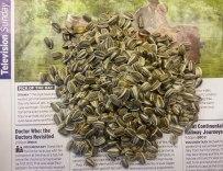 Loose sunflower seeds