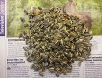 Loose sunflower seeds