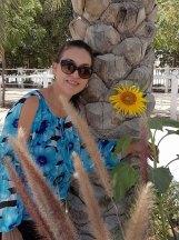 Sunflower grown in Dubai