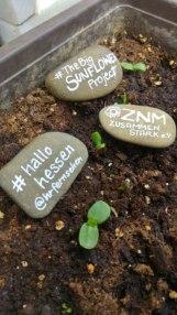 Seedlings and stones