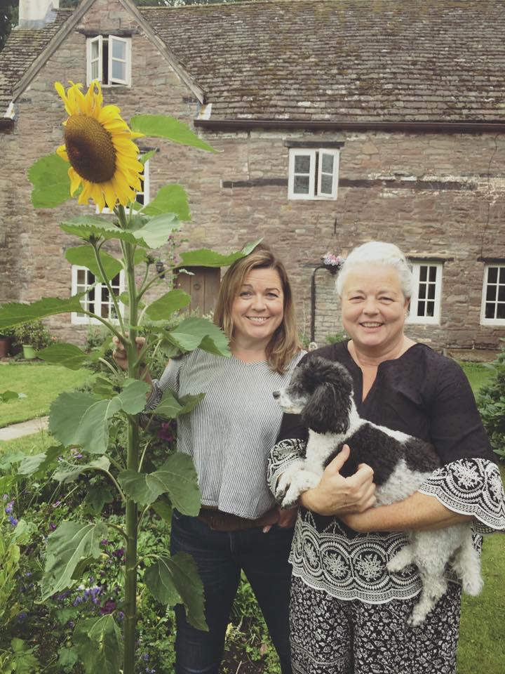 Sunflower grown in UK