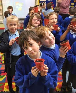 Planting sunflowers at Llanfoist Fawr school.