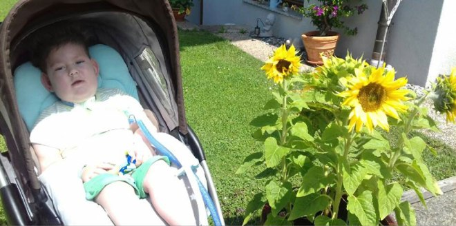 Marius and sunflowers.