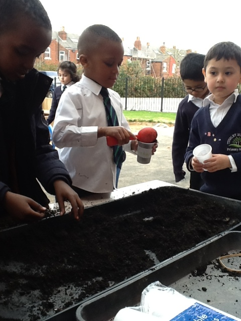 Planting sunflowers at Tinsley Meadows.