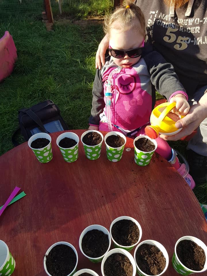 Planting sunflower seeds.