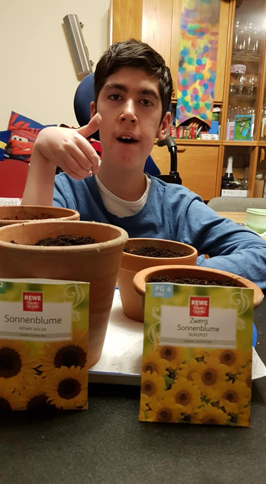 Planting sunflower seeds in Germany.